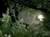 Magical Full Moon in Redwood Canopy