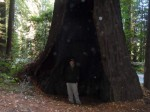 Humboltd Redwood Forest in friends' gallery photo gallery
