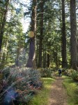 spruce forest entities (3 of 4) in friends' gallery photo gallery